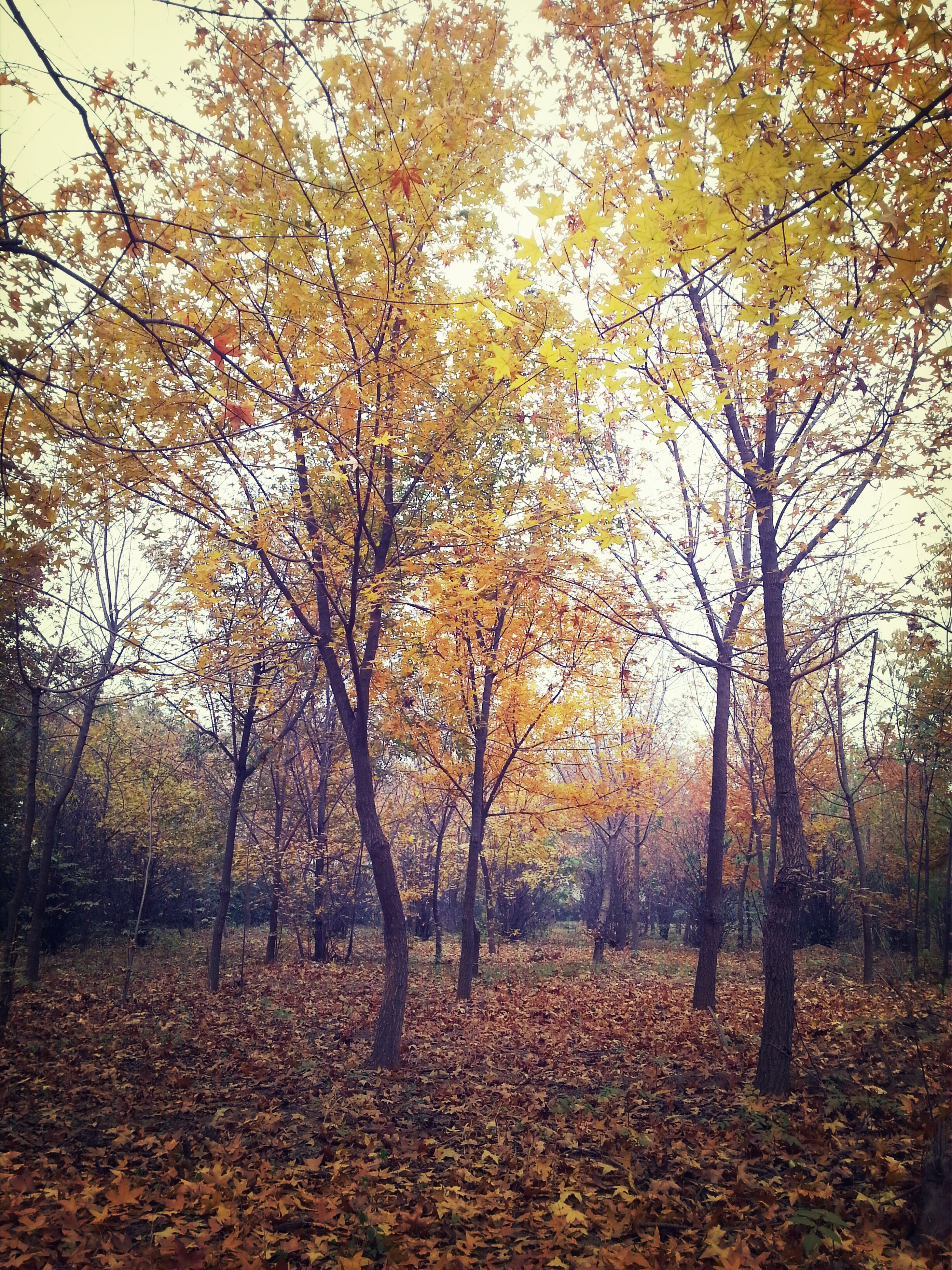 tree, autumn, change, season, tranquility, nature, branch, beauty in nature, tranquil scene, leaf, scenics, growth, tree trunk, fallen, orange color, yellow, landscape, day, forest, park - man made space