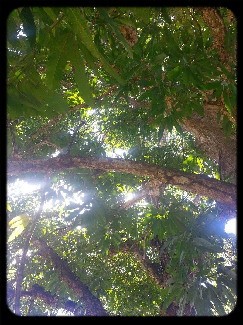 gurabo Nature . In Gurabo .. Puerto Rico