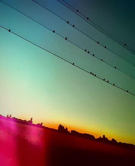 Color Palette Bird On A Wire Eyeemphoto EyeEm Gallery Showcase August Birds Eye View Get Out There Spectacular Isnt Nature Grand? Outside Photography Nature_collection Nature Photography Outdoor Photography Oregon Sunrise Sunrise_Collection Sun Wow Sun Worshipper Bird Watching Tweet4tweet Tweet Tweet Little Birds Loads Of Birds Animals In The Wild