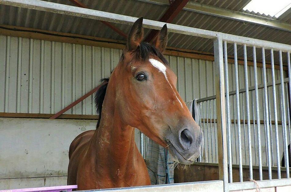 Hello World Cheese! Enjoying Life Inquisitive Taking Photos Horse Horse Life I Love Horses Horse Love Exracehorse Horse Stables!