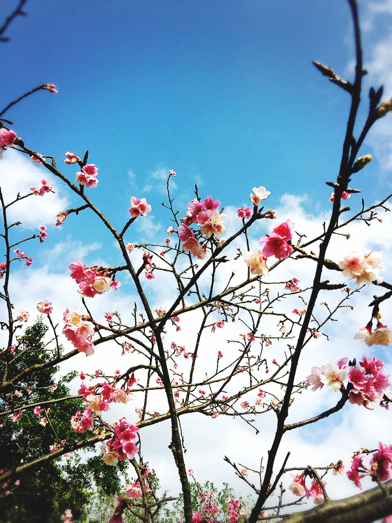 きれいな桜が咲いた⋯⋯ Flower Nature