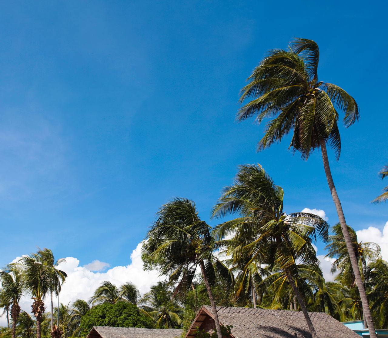tree, palm tree, low angle view, growth, sky, nature, day, outdoors, blue, beauty in nature, tree trunk, no people, scenics