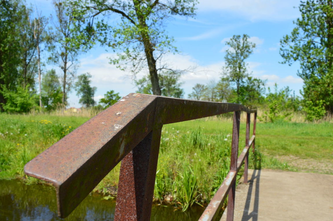 Tree No People Day Water Outdoors Sky Grass Close-up Bridge Handrail Metal Nikonphotography Nikon D3200 No Filter