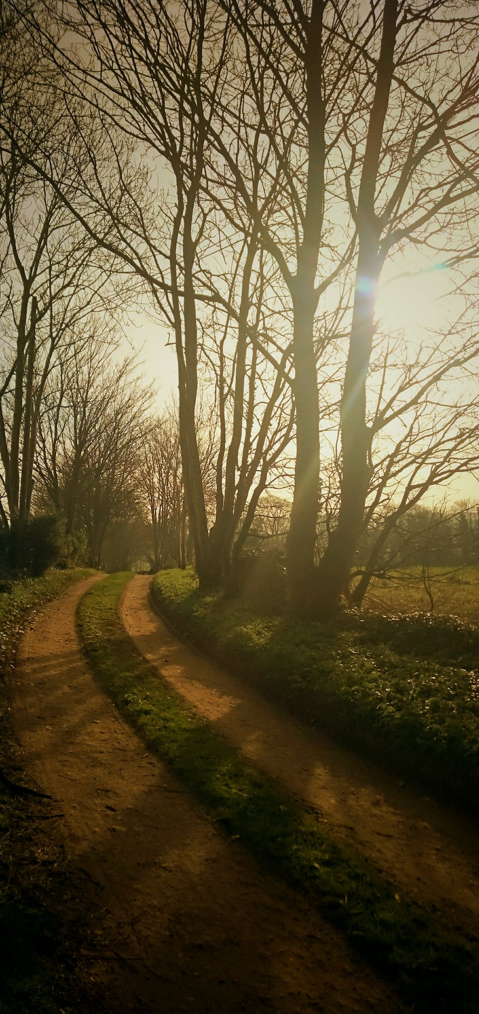 Sunlight Tree Nature Sunbeam Outdoors Shadow Beauty In Nature Sun Sunset No People Scenics Tranquility Landscape EeyemBestEdits Tranquil Scene English Countryside Beauty In Nature English Landscape Paths