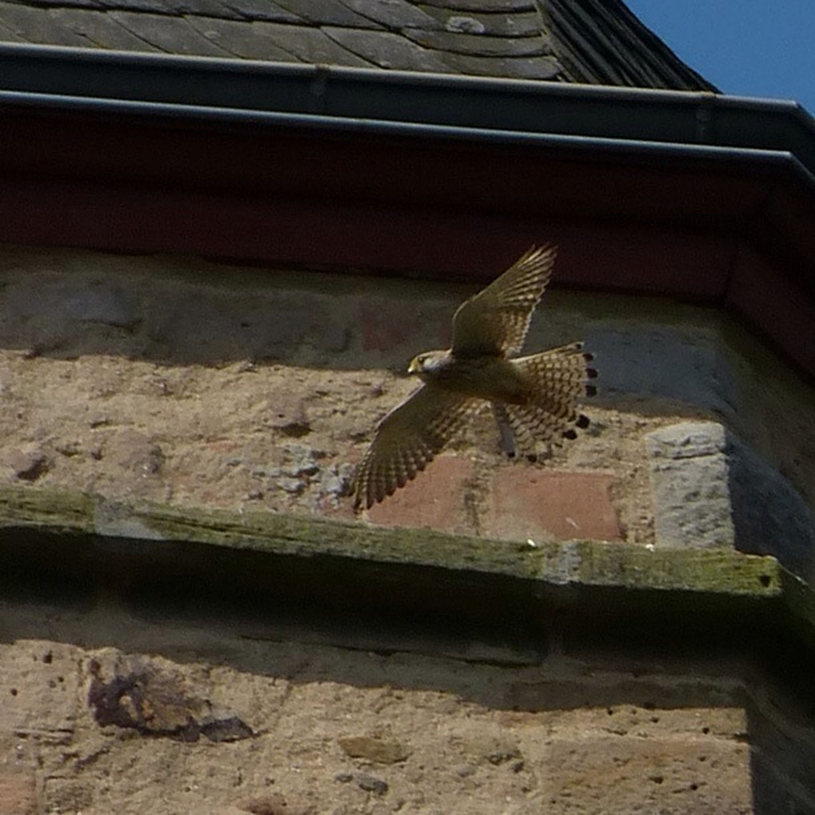 animals in the wild, animal themes, one animal, wildlife, building exterior, built structure, low angle view, architecture, insect, wall - building feature, outdoors, day, bird, perching, no people, brick wall, animal wing, wall, sunlight, full length