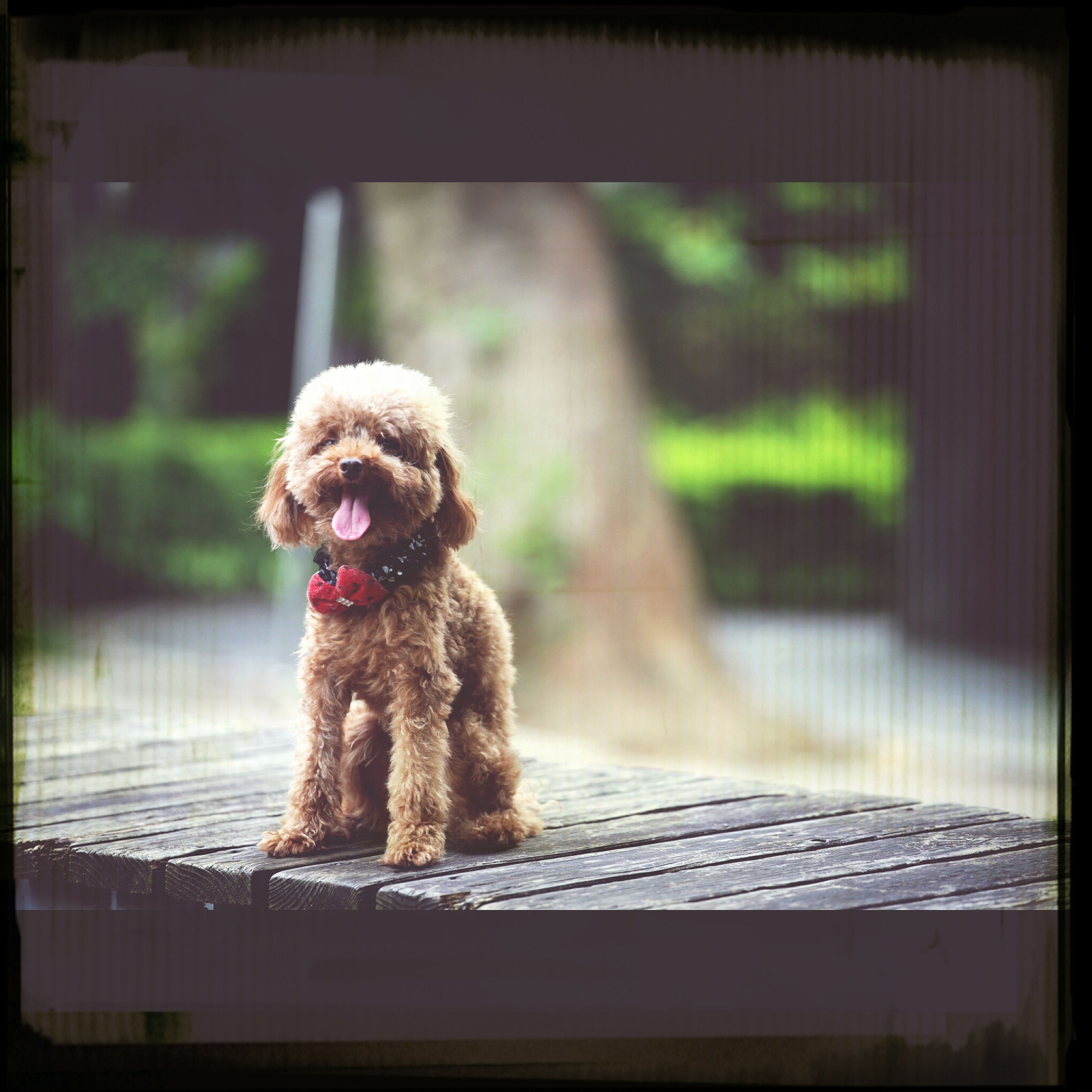 animal themes, one animal, focus on foreground, transfer print, water, wildlife, dog, animals in the wild, mammal, sitting, pets, auto post production filter, bird, domestic animals, indoors, day, rear view, close-up, animals in captivity, full length