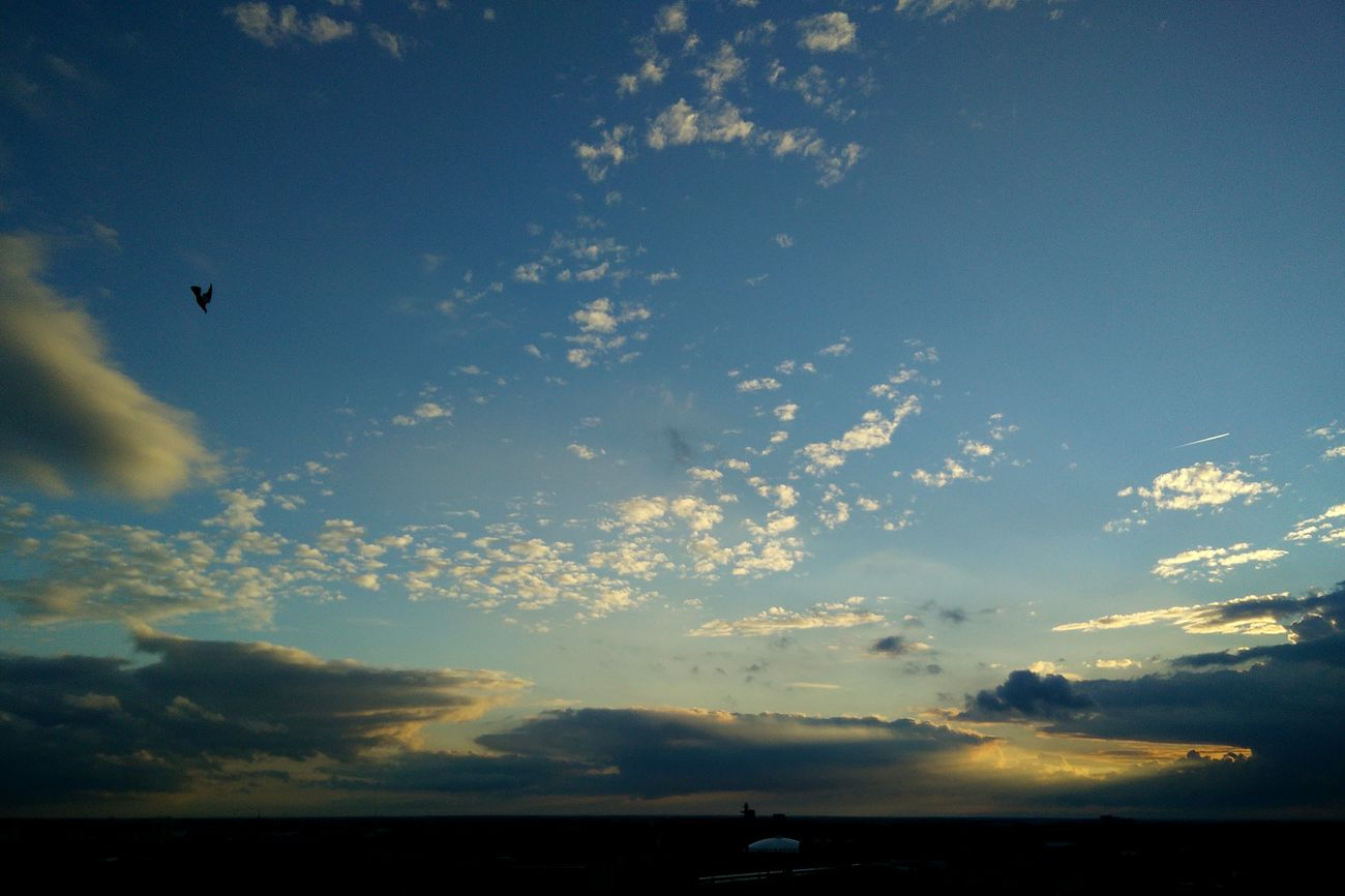 Dive bombing Picturesofskies Xoes PhonePhotography