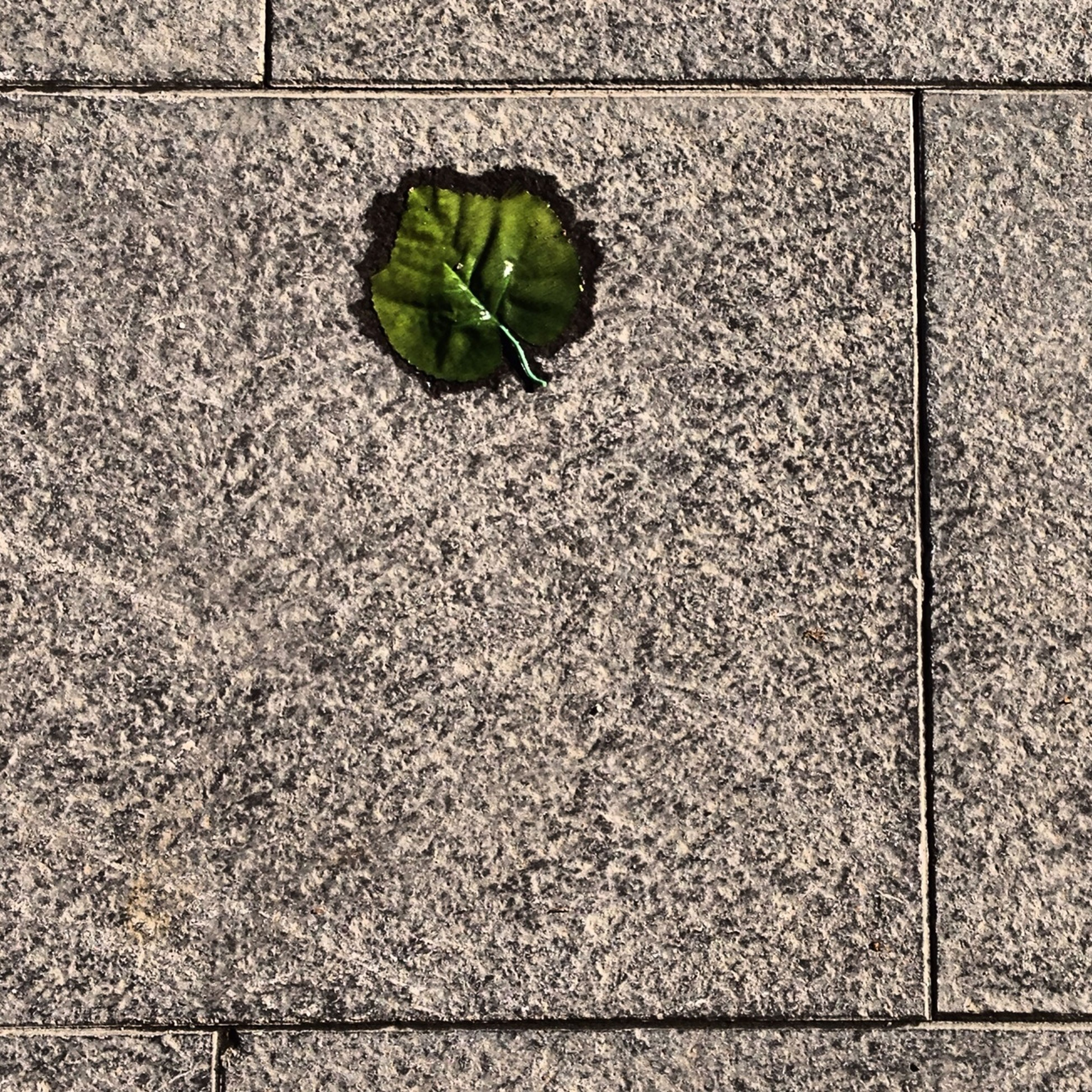 leaf, high angle view, green color, plant, growth, close-up, textured, no people, nature, full frame, day, growing, pattern, directly above, outdoors, wall - building feature, green, backgrounds, ground, paving stone