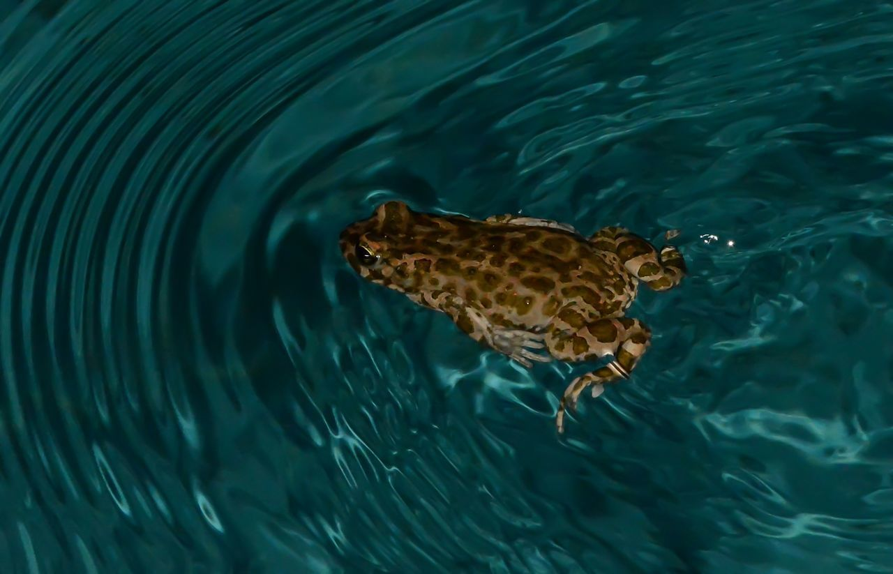 Animal Themes Animal Wildlife Animals In The Wild Close-up Nature One Animal Outdoors Swimming Water