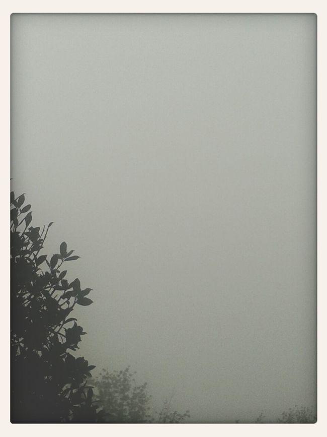 Nebbia Grigio Noia Bonjour Tristesse #pensieri #nocolors #vuoto #ilnulla #D: