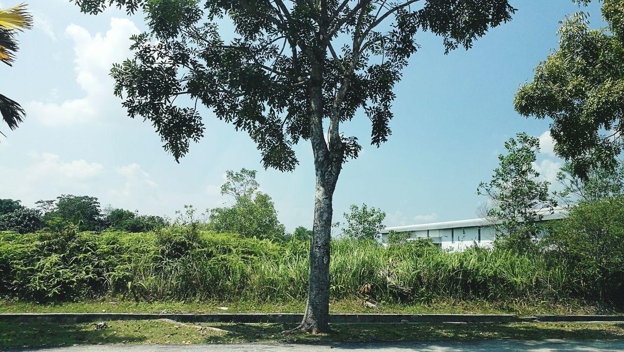 Tree & bush