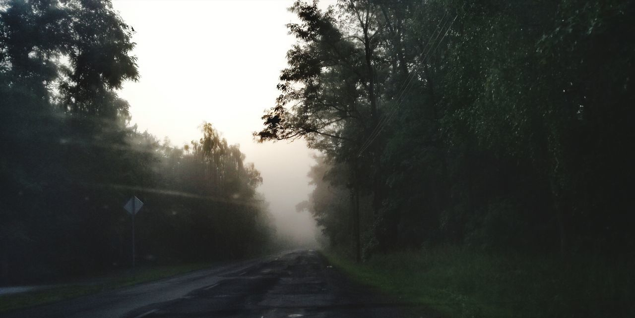 the way forward, tree, road, nature, no people, fog, landscape, day, outdoors, sky