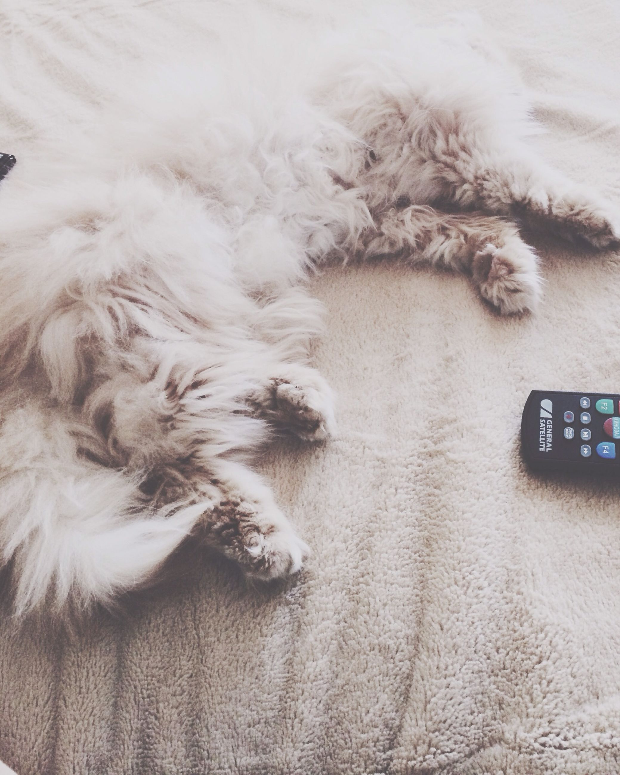 domestic animals, pets, one animal, mammal, animal themes, domestic cat, dog, cat, indoors, high angle view, feline, white color, animal hair, relaxation, no people, lying down, sleeping, resting, close-up, animal head