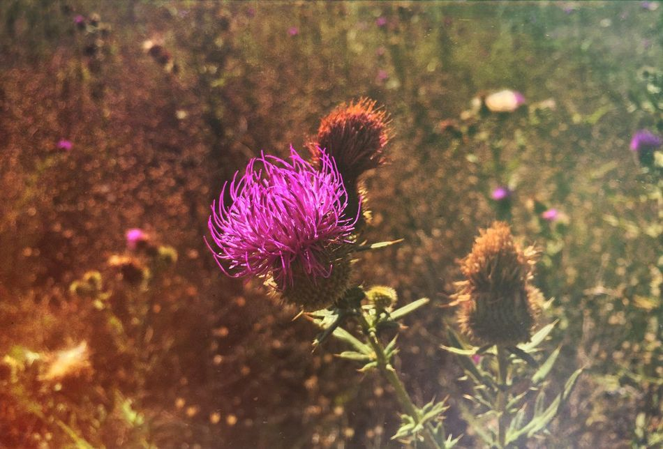 InstaDimka Flowers