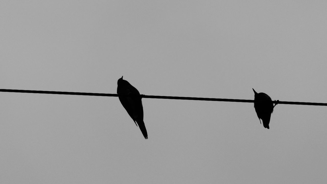 Bird Animal Wildlife Animals In The Wild Flying Animal Themes Silhouette Outdoors No People Nature Day Sky Abstraction In Black And White Abstractions In BlackandWhite Abstraction On Wire