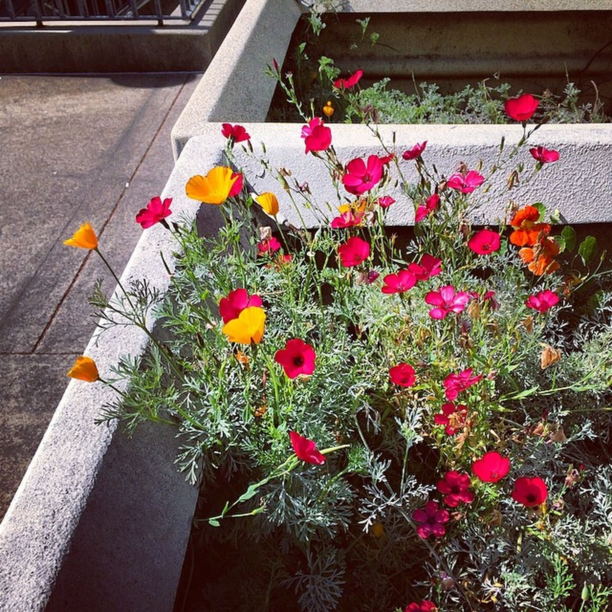 flower, freshness, plant, fragility, petal, growth, red, blooming, high angle view, beauty in nature, flower head, potted plant, nature, in bloom, day, no people, leaf, front or back yard, built structure, outdoors