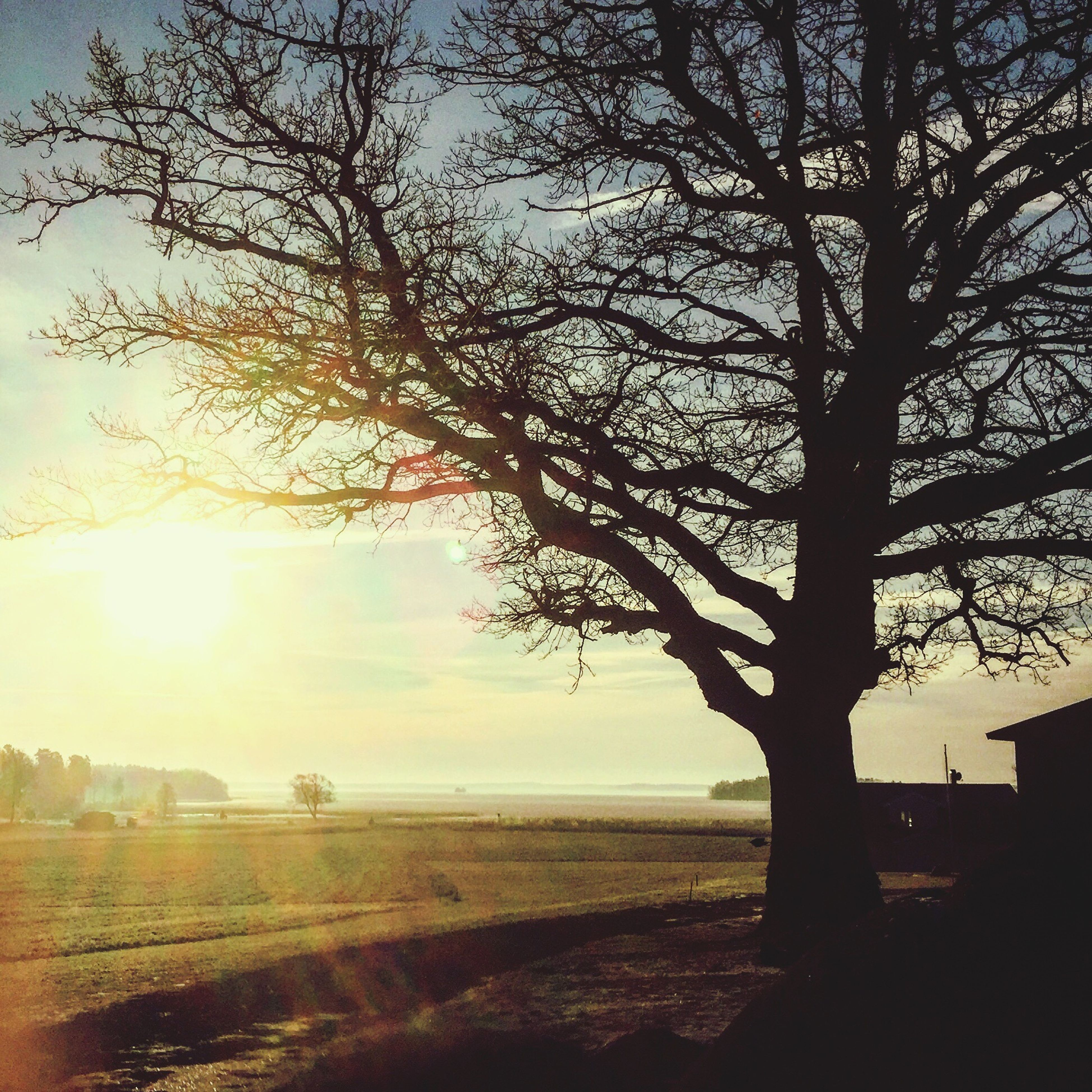 tree, nature, sunset, sunlight, beauty in nature, sky, scenics, tranquil scene, tranquility, sun, growth, outdoors, no people, field, landscape, sunbeam, branch, day