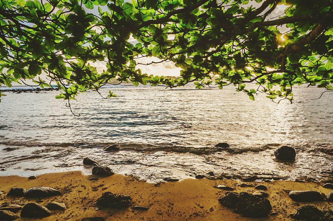 Nature Backgrounds Sand Beach Tree Water Landscape Plant Sea No People Beauty In Nature Outdoors Sunset Tropical Climate Ecosystem  Day Hawaii Cloud - Sky Kauai Hawaii Lifeisbeautiful JurrasicWorld Travel Destinations Horizon Over Water Wildlife & Nature Hawaii Life