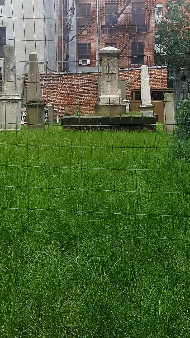 grass, architecture, building exterior, built structure, green color, day, growth, outdoors, no people, city