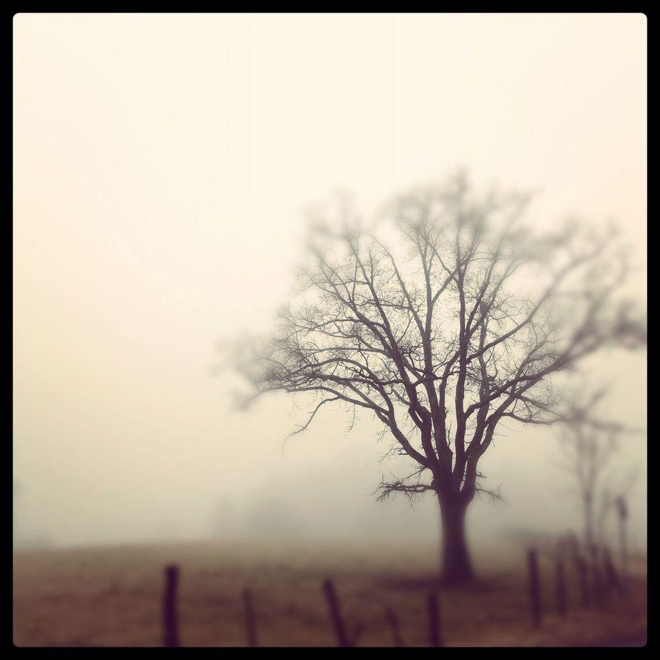 fog at Homeland Fog