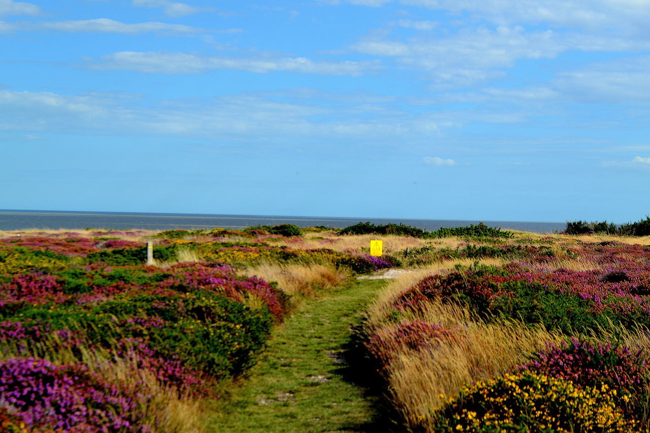 Beauty In Nature Dunwich Heath Flower Horizon Over Water Landscape Naturelovers Suffolk, United Kingdom The Way Forward