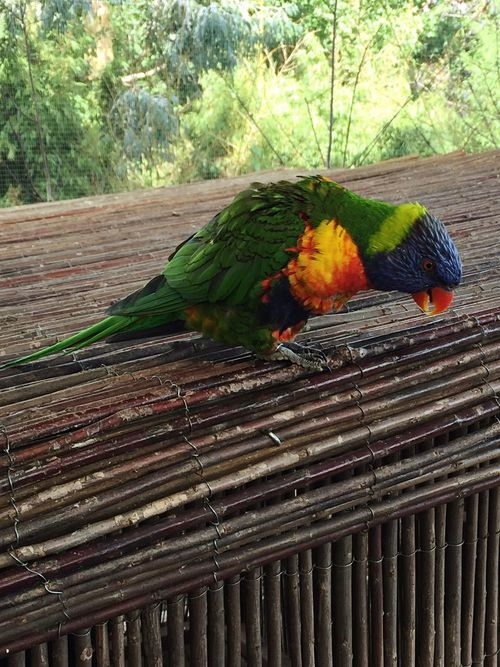 Animals In The Wild Bird Outdoors Wildlife Beautiful Domestic Animals Nature Day Agriculture Green Color Multi Colored Bird Photography