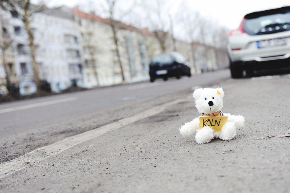 Beautiful stock photos of teddy bear, Abandoned, Animal Representation, Architecture, Building Exterior