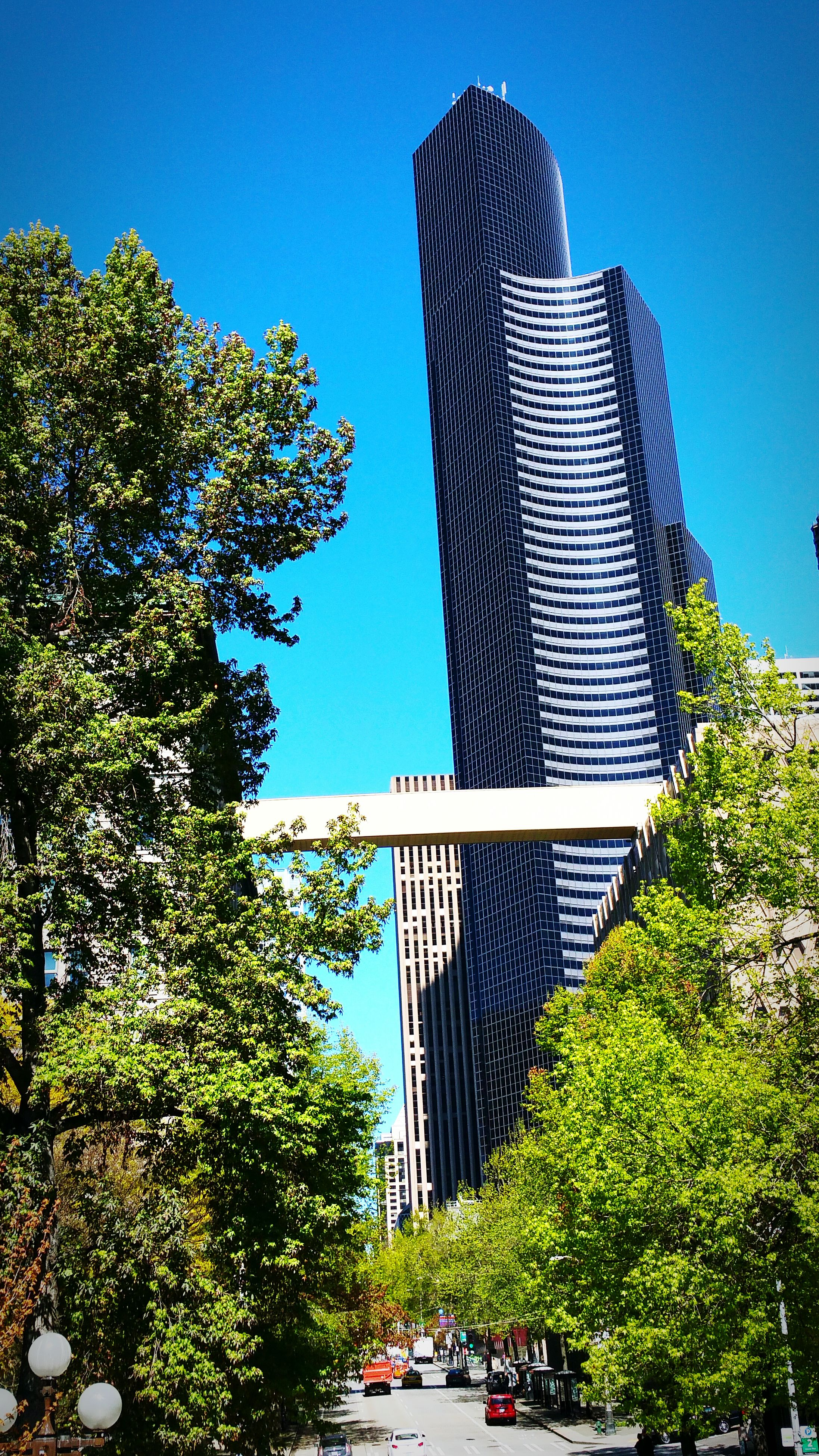 clear sky, architecture, built structure, tree, low angle view, building exterior, blue, tall - high, modern, skyscraper, city, tower, office building, growth, sunlight, tall, transportation, day, outdoors, copy space