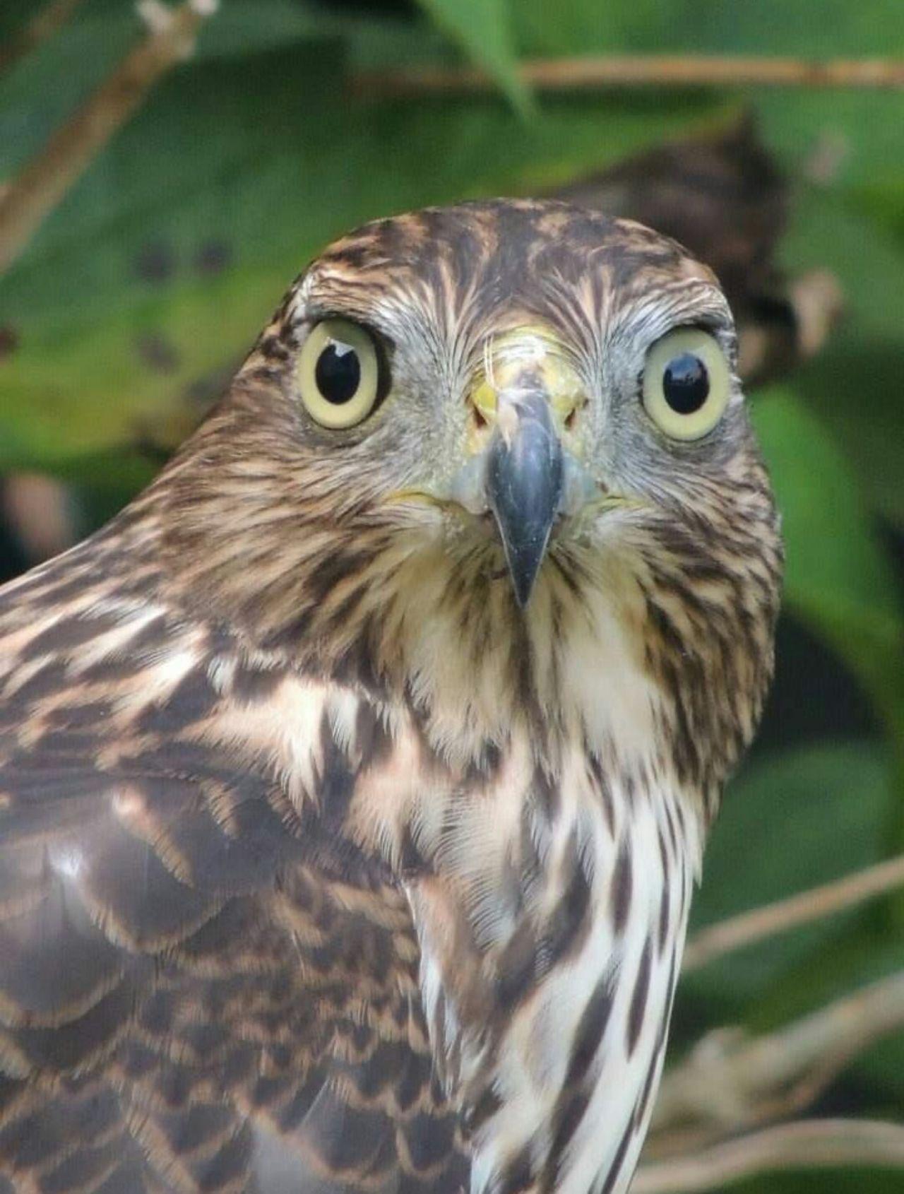 Beautiful stock photos of hawks, Animal Body Part, Animal Eye, Animal Markings, Animal Themes