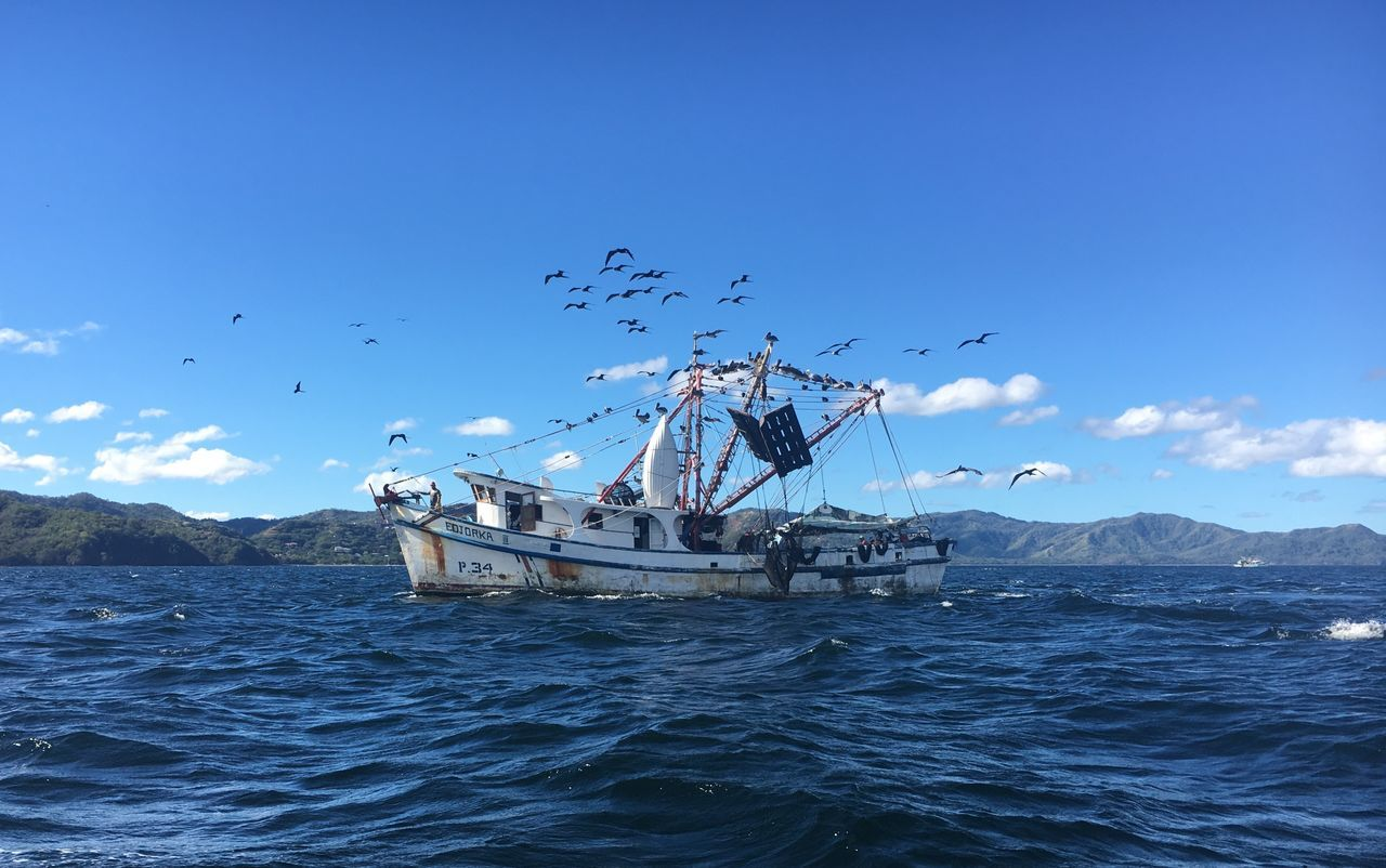 EyeEmNewHere Sea Fishing Seagull Seagulls Seagulls And Sea Seagulls In Flight Blue Sky Clouds And Sky Fishing Boat Fishing Nets Fish Fishing Boats Fishing Ship Old Old Ship Costa Rica Pacific Ocean Pacific Ocean Oceanside Liberia Costa Rica Navamaagal