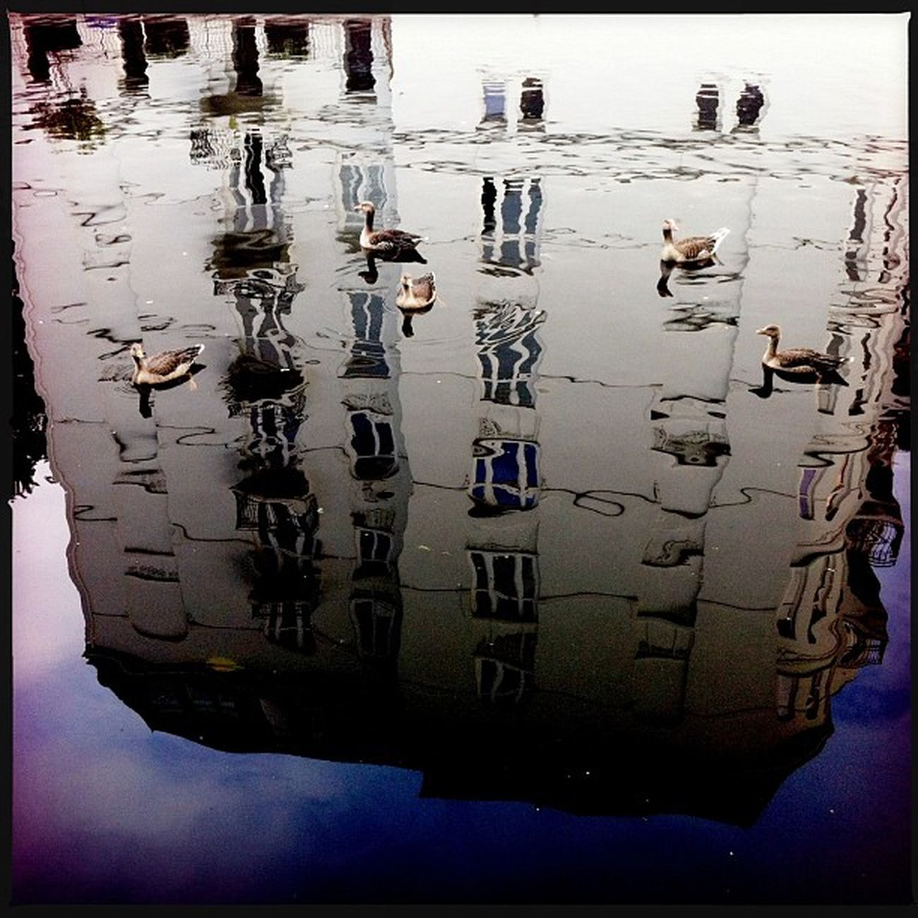 Enten auf Haus Reflection Clouds Water Hipstamatic Windows Blue Germany White Hamburg Ducks Deutschland Hh