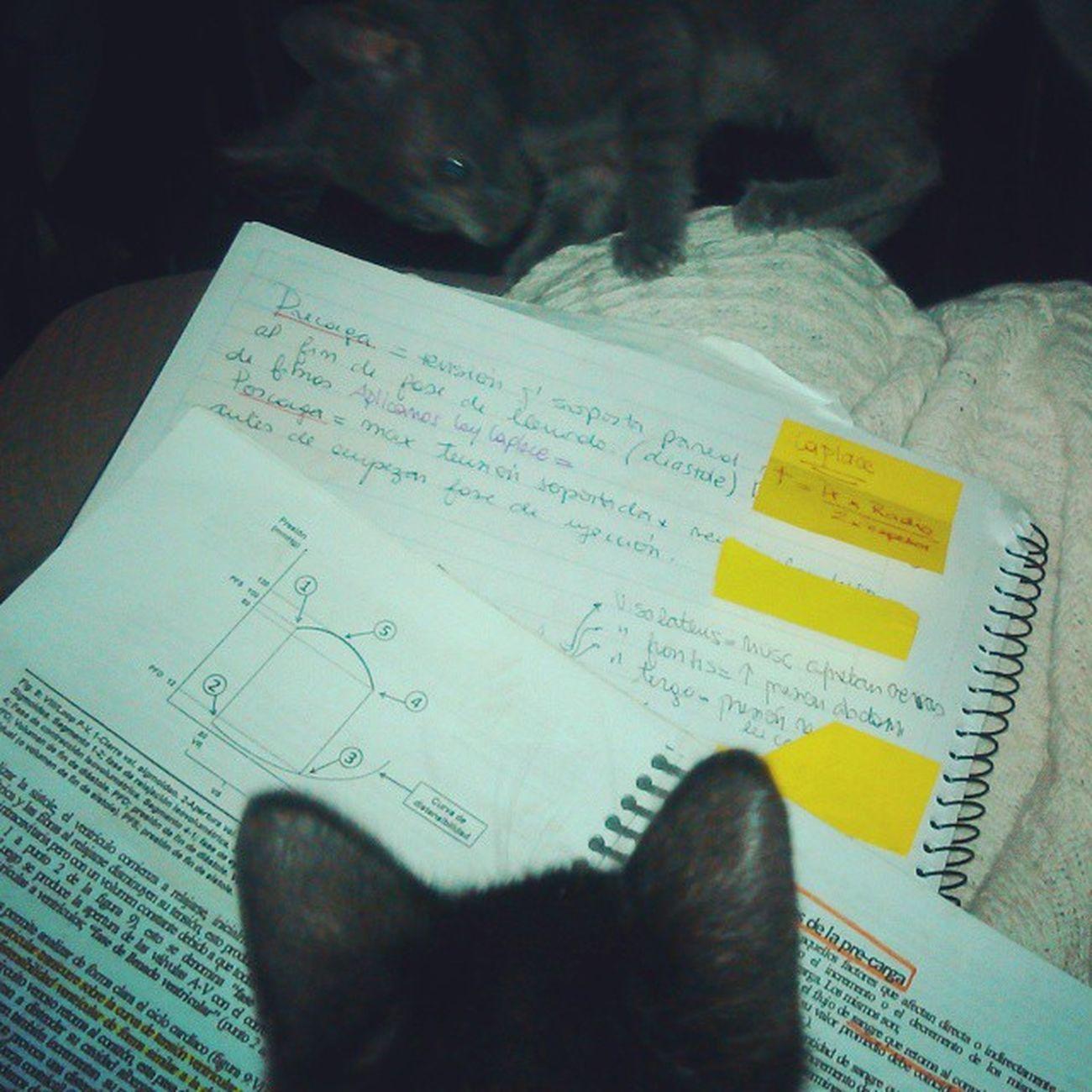 Loop presión/volumen y bueno... GATITOOOS! Medicina Cardio Ubamedicina Fisiologia Kitten Kittens Kittensofinstagram