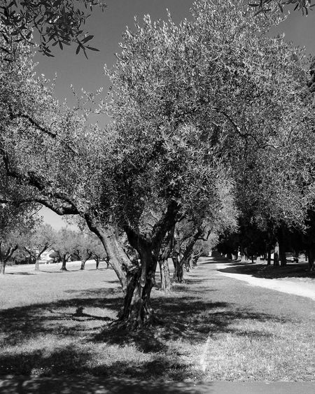 Tree Nature Outdoors Landscape No People Beauty In Nature Tree Travel Travel Photography Journey Trip Exploring Explorer Nature Garden Garden Photography Nature_collection Black And White Collection  Roma Italy Europe Traveling Green Black Color Gardentime