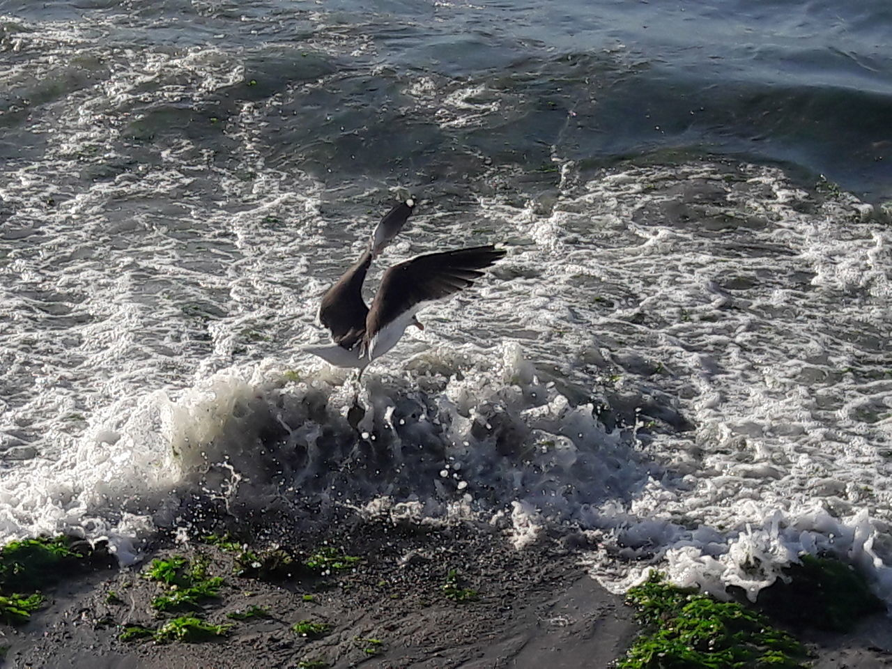 water, animal themes, animals in the wild, one animal, high angle view, motion, day, sea, nature, no people, animal wildlife, outdoors, waterfront, bird, mammal, spread wings, swimming, beauty in nature