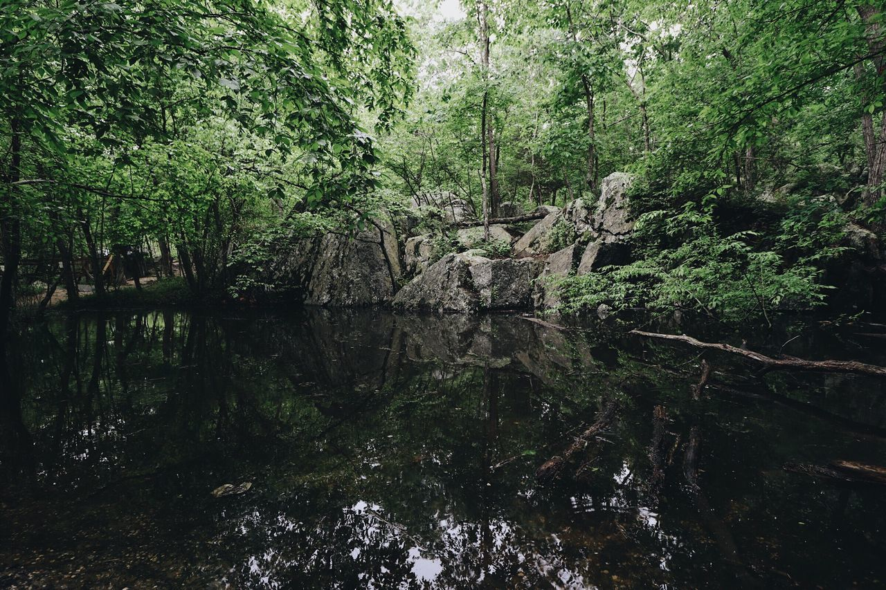 Nature Reflection Forest Outdoors Growth Tranquility Water Adventure River No People First Eyeem Photo The Great Outdoors - 2017 EyeEm Awards The Great Outdoors - 2017 EyeEm Awards