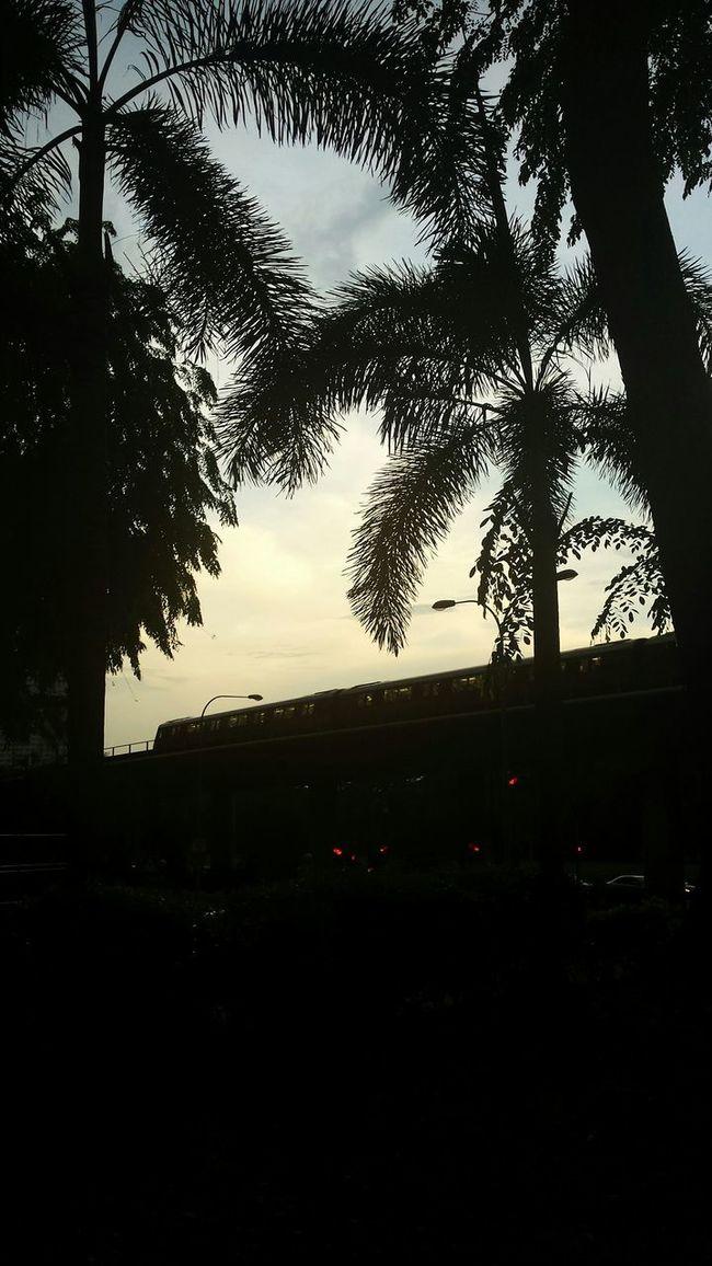 Sillouette Sundown After Dark Eyeem Singapore Singapore Buona Vista Trees Mrt Coconut Trees