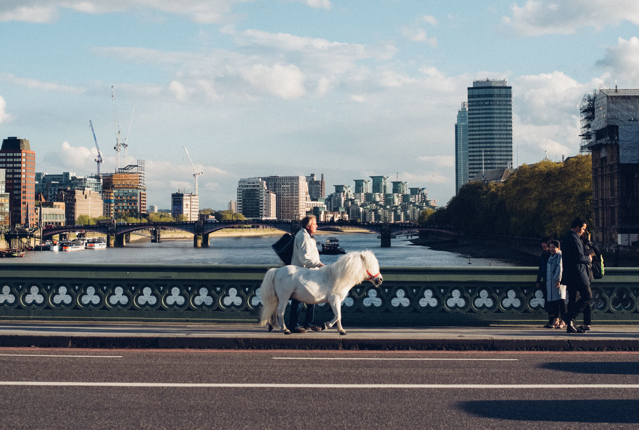 The man with the horse Animal Bridge City City Life Cityscape EyeEm Best Shots EyeEm Gallery Folk Horse Horses Kinfolk Livefolk London Man Outdoors People Pets Pony Surreal Surrealism The Week Of Eyeem Urban Walking We Westmister