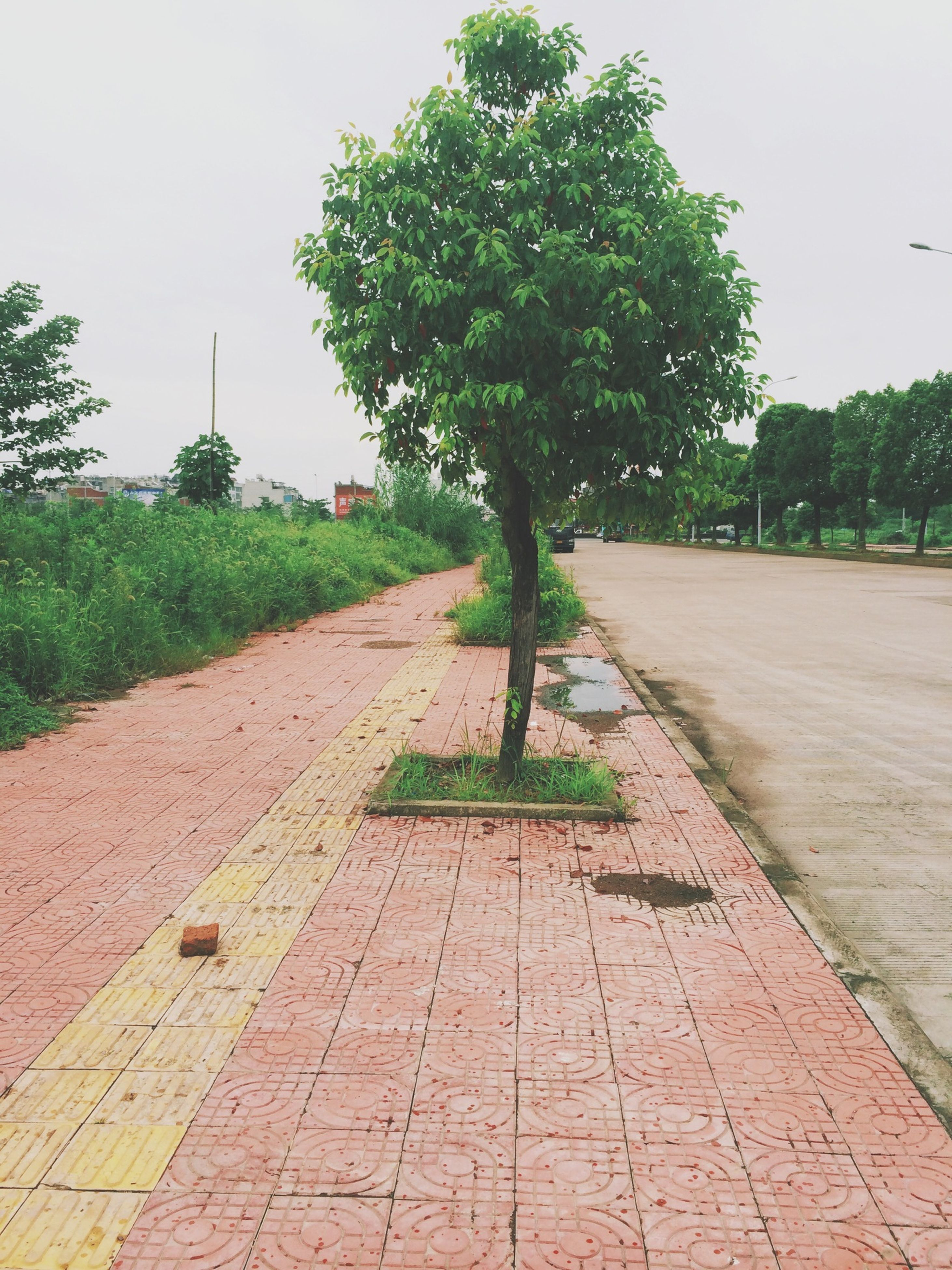 tree, the way forward, footpath, built structure, building exterior, cobblestone, paving stone, street, clear sky, architecture, road, growth, sky, diminishing perspective, walkway, day, sidewalk, empty, street light, outdoors