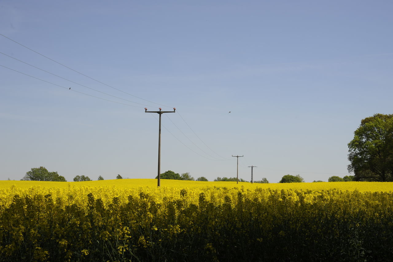cable, connection, field, oilseed rape, nature, yellow, technology, day, no people, beauty in nature, electricity pylon, growth, clear sky, outdoors, rural scene, sky, scenics