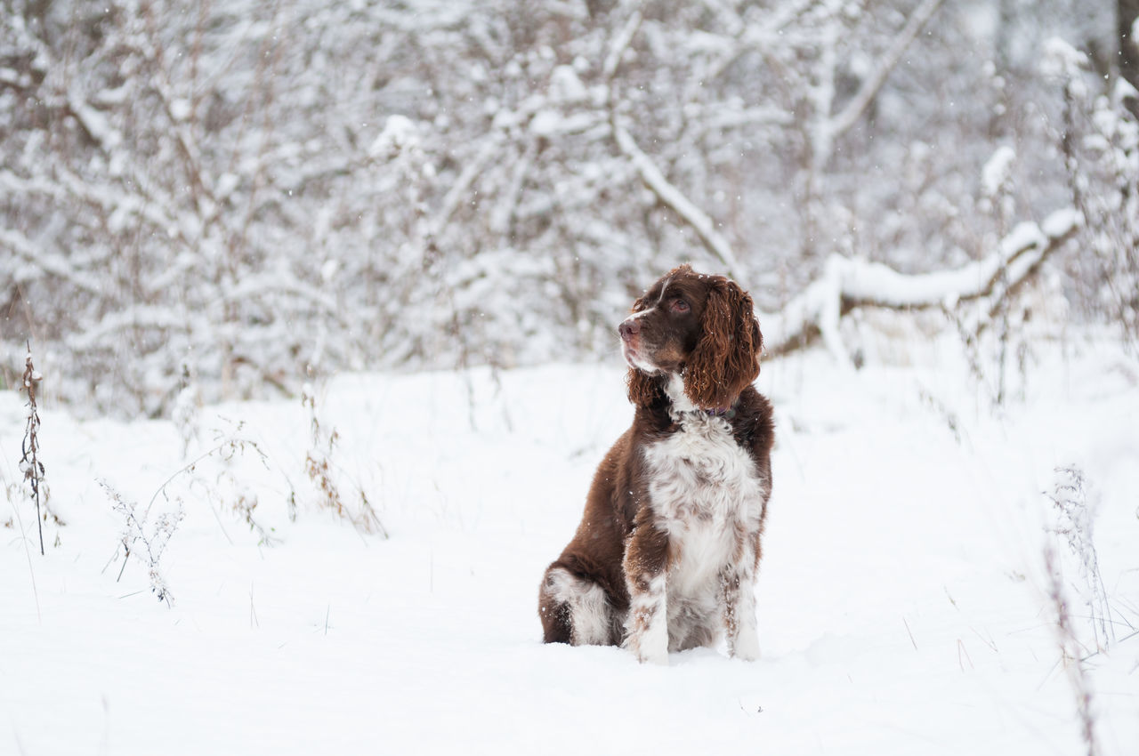 dog, snow, pets, winter, one animal, cold temperature, domestic animals, animal themes, mammal, nature, field, outdoors, day, no people, tree, beauty in nature