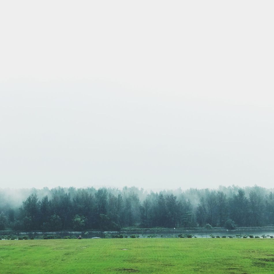 Agriculture Animal Themes Beauty In Nature Cold Temperature Copy Space Day Field Fog Grass Hazy  Idyllic Landscape Nature No People Outdoors Rural Scene Scenics Sky Tranquil Scene Tranquility Tree