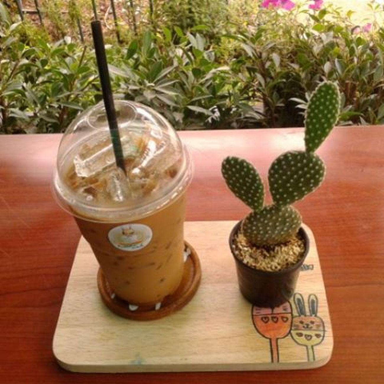 อยากกินกาแฟแล้วว ..เมื่อใดจะหายย // กินไม่ได้ ถ่ายรูปเก็บไว้ก็ยังดี 😊🌵☕ Coffee Coffeemania Mylife Espresso cactus favorite faifav rabbit rabbitcafe cnx thailand