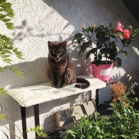 Guten Morgen vom Balkon! Tshaga hat sich sehr gut erholt 😺 Genießt den Feiertag, ihr Lieben! Tshaga_the_cat