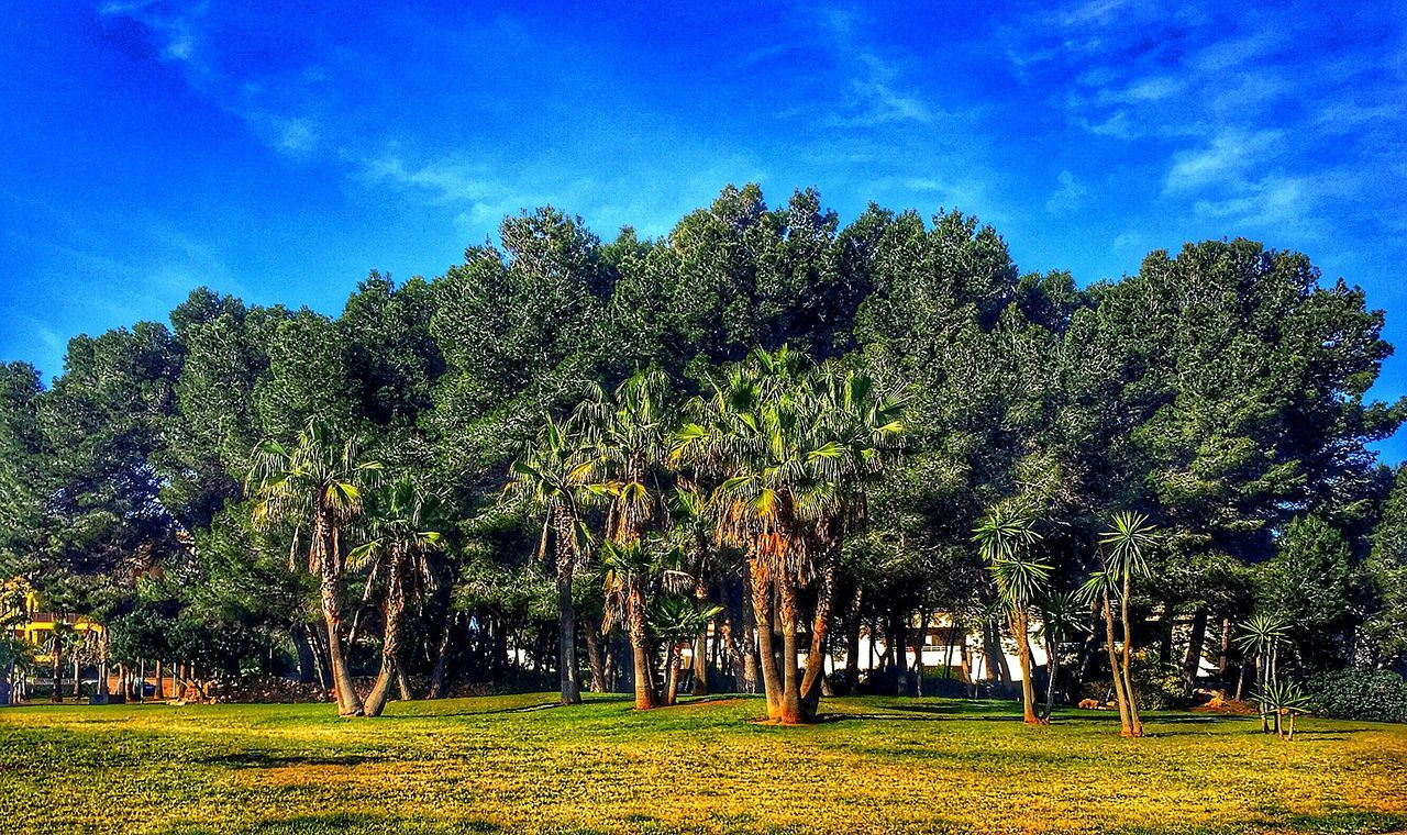 tree, growth, tranquility, nature, beauty in nature, tranquil scene, blue, no people, scenics, field, landscape, sky, outdoors, day, grass