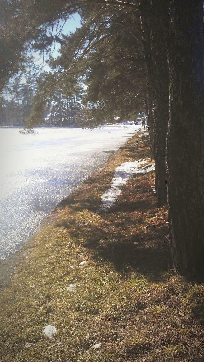 Zlatibor Holiday Snow Ice Trees Tree