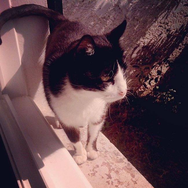 Cat Instamorning Sleepy Tired sun sunday animals may picoftheday instacat