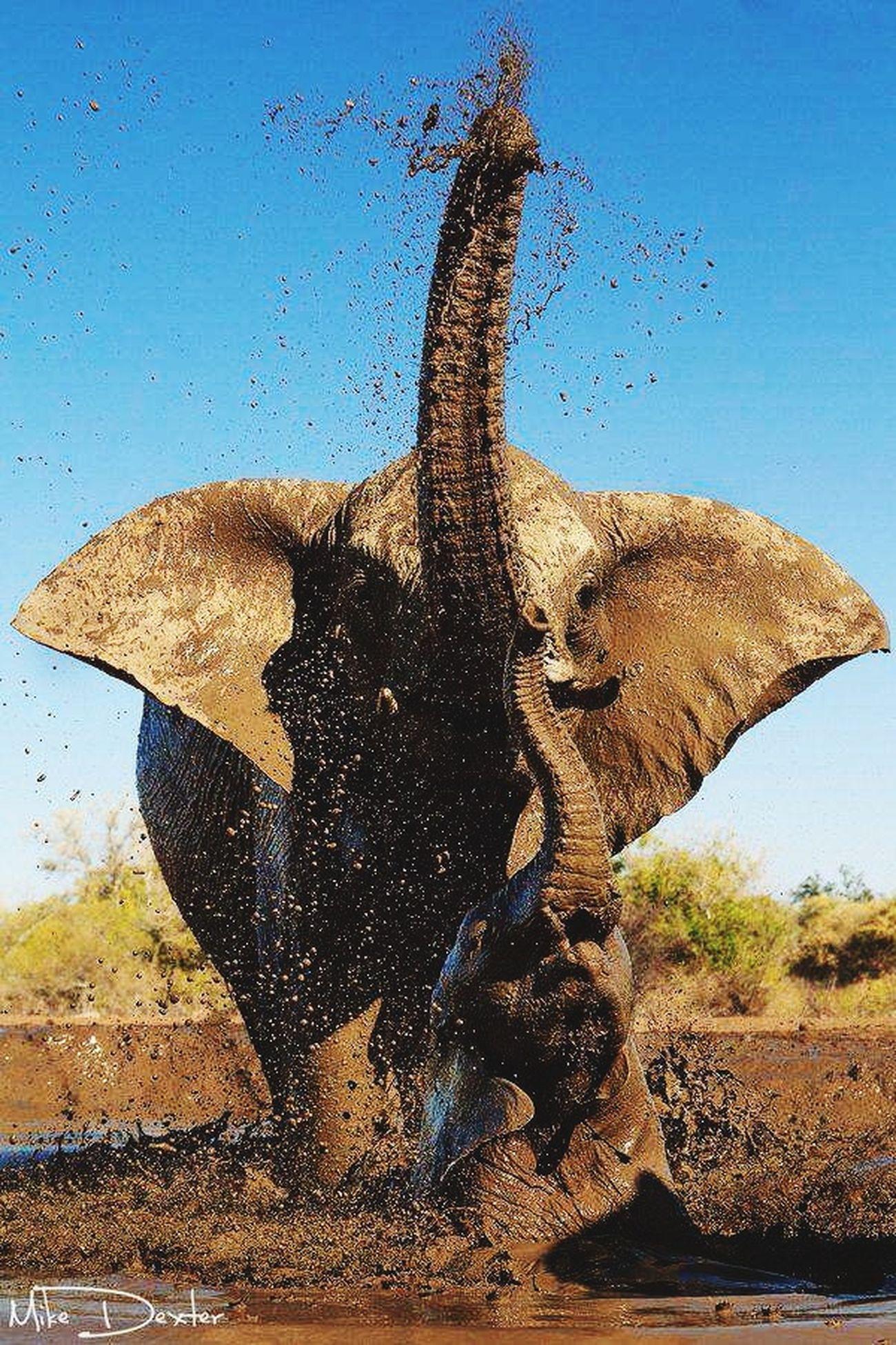 Jambo bwana, karibu Kenya