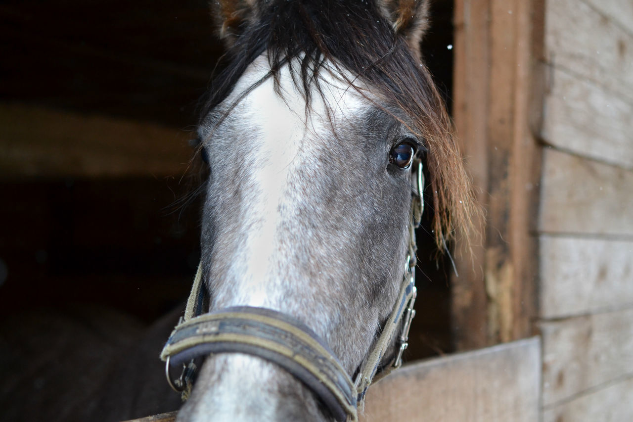 domestic animals, horse, mammal, one animal, animal themes, livestock, animal head, focus on foreground, close-up, outdoors, no people, day, barn