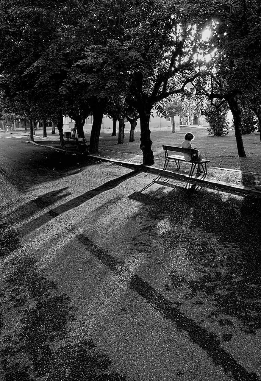 tree, shadow, real people, sunlight, men, nature, outdoors, transportation, day, growth, road, full length, childhood, togetherness, adult, people