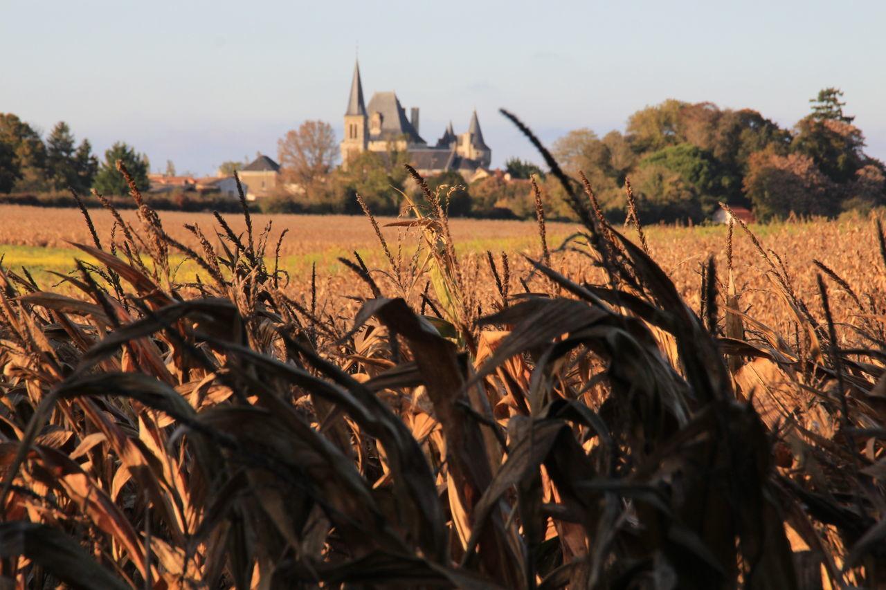 Autumn Autumn Colors Corn Countryside Castle Landscape Nature EyeEm Nature Lover